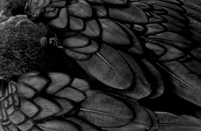Bücherkrähe ist jetzt Crow and Kraken
