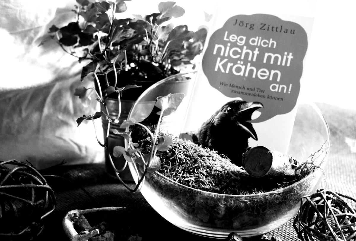 [Rezension] Jörg Zittlau – Leg dich nicht mit Krähen an
