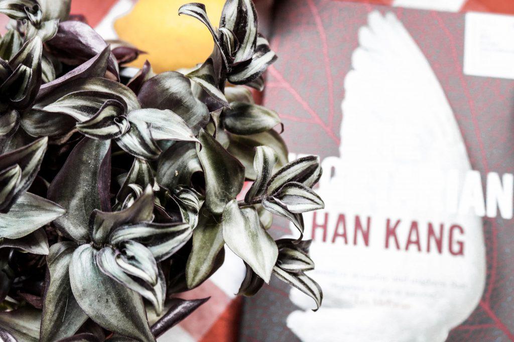 """Von oben fotografierte Pflanze mit grün-lila Blättern, im Hintergrund unscharf das Buch """"The Vegetarian"""" von Han Kang"""